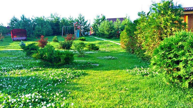 Зеленеющая травка