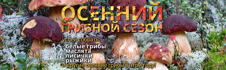 Осенние белые грибы